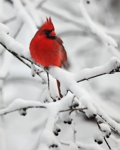 Snowy Perch